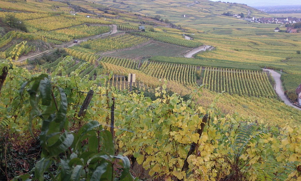 Where You Should Go On a Wine Tour In France